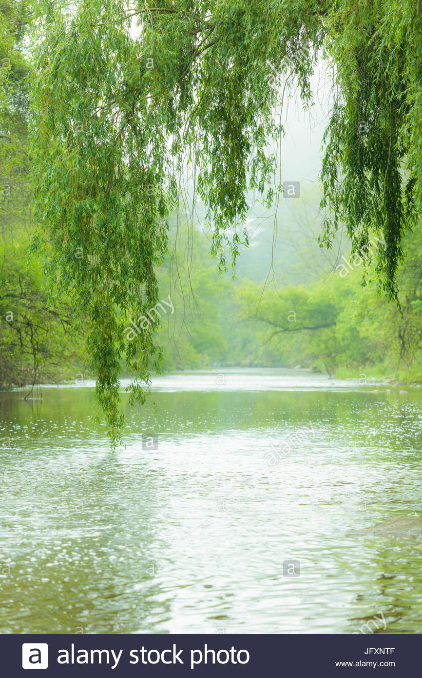 River on a hot windless summer day in the green hazy Carolinian Forest of Colonel Danforth Park in Toronto Ontario - Stock Image