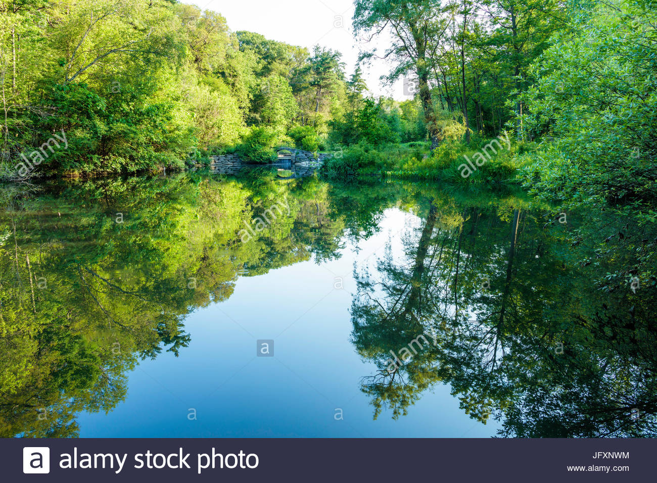 Reflections of forest in Ridout Pond a stormwater retention sedimentation pond in High Park in summer in Toronto - Stock Image