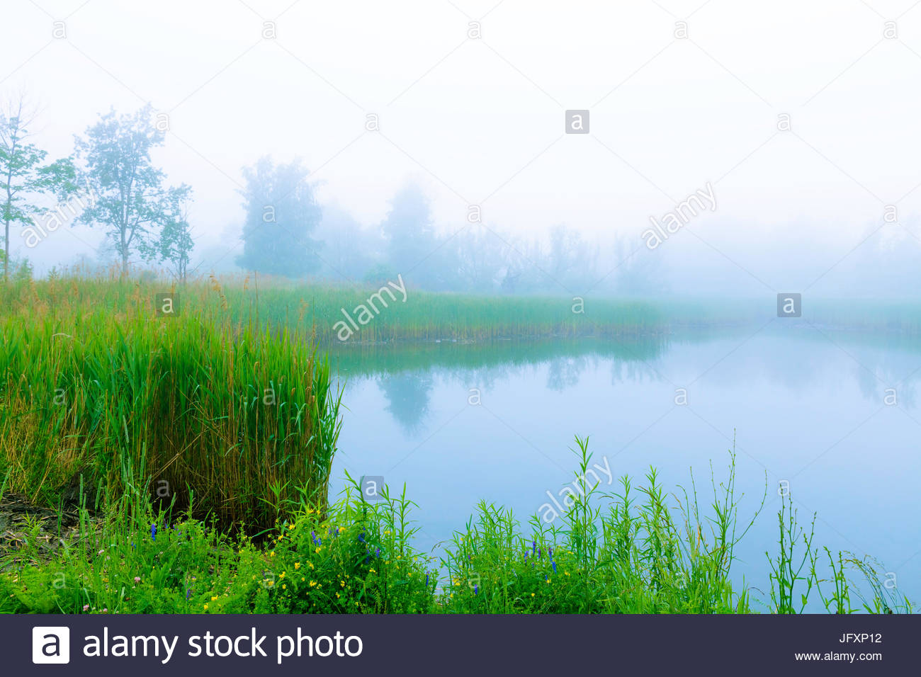 Reflections and fog in a stormwater retention sedimentation pond in Eastpoint Park in summer in Toronto Ontario - Stock Image