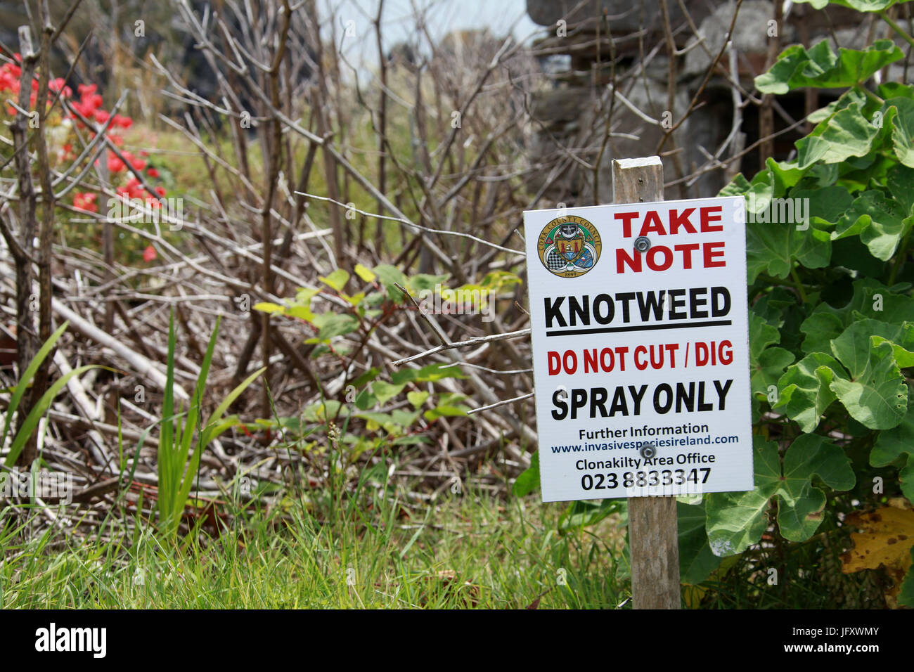 Treated knotweed plants and warning sign in the Republic of Ireland - Stock Image