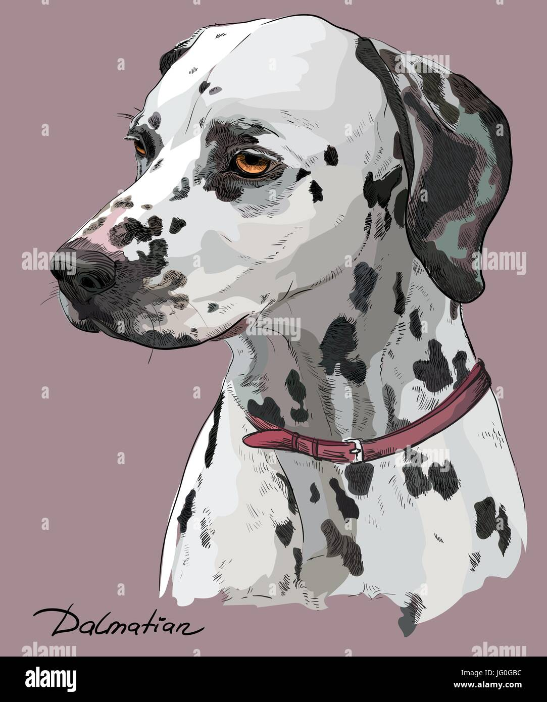 Coloful hand drawing vector portrait of dalmatian dog in profile on pink background - Stock Vector