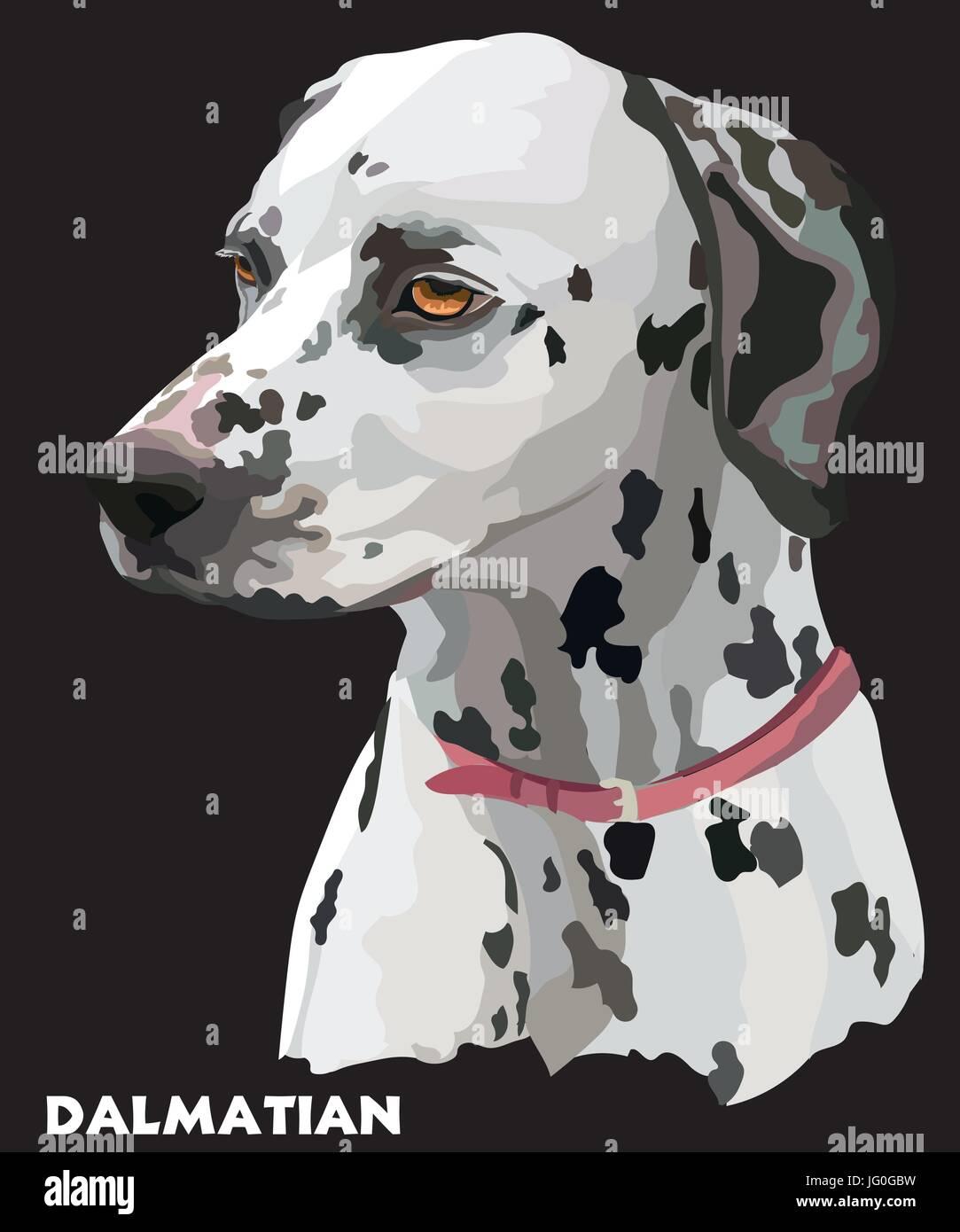 Colored portrait of dalmatian vector Illustration on black background - Stock Vector