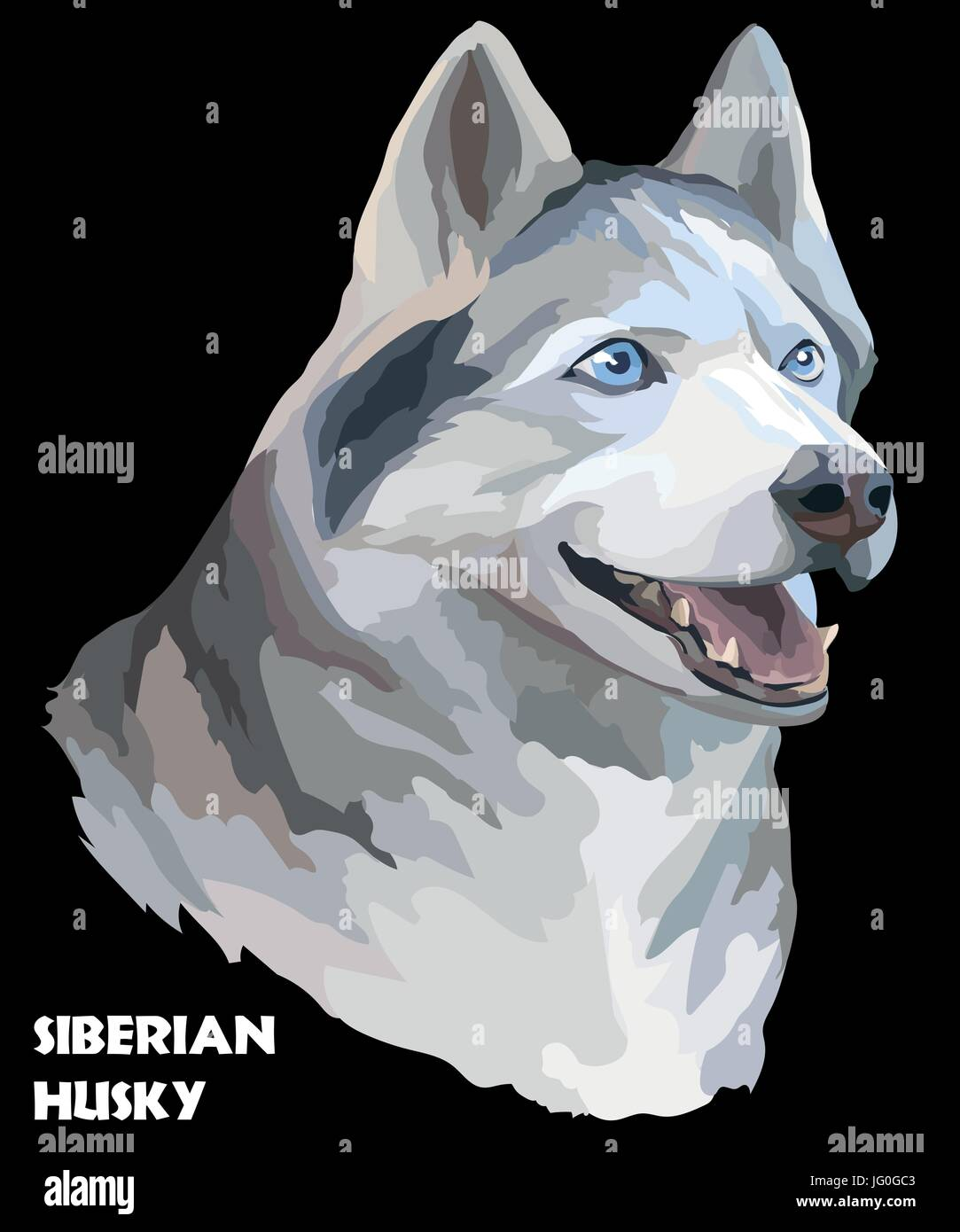 Vector colored portrait of siberian husky hand drawing Illustration on black background - Stock Vector
