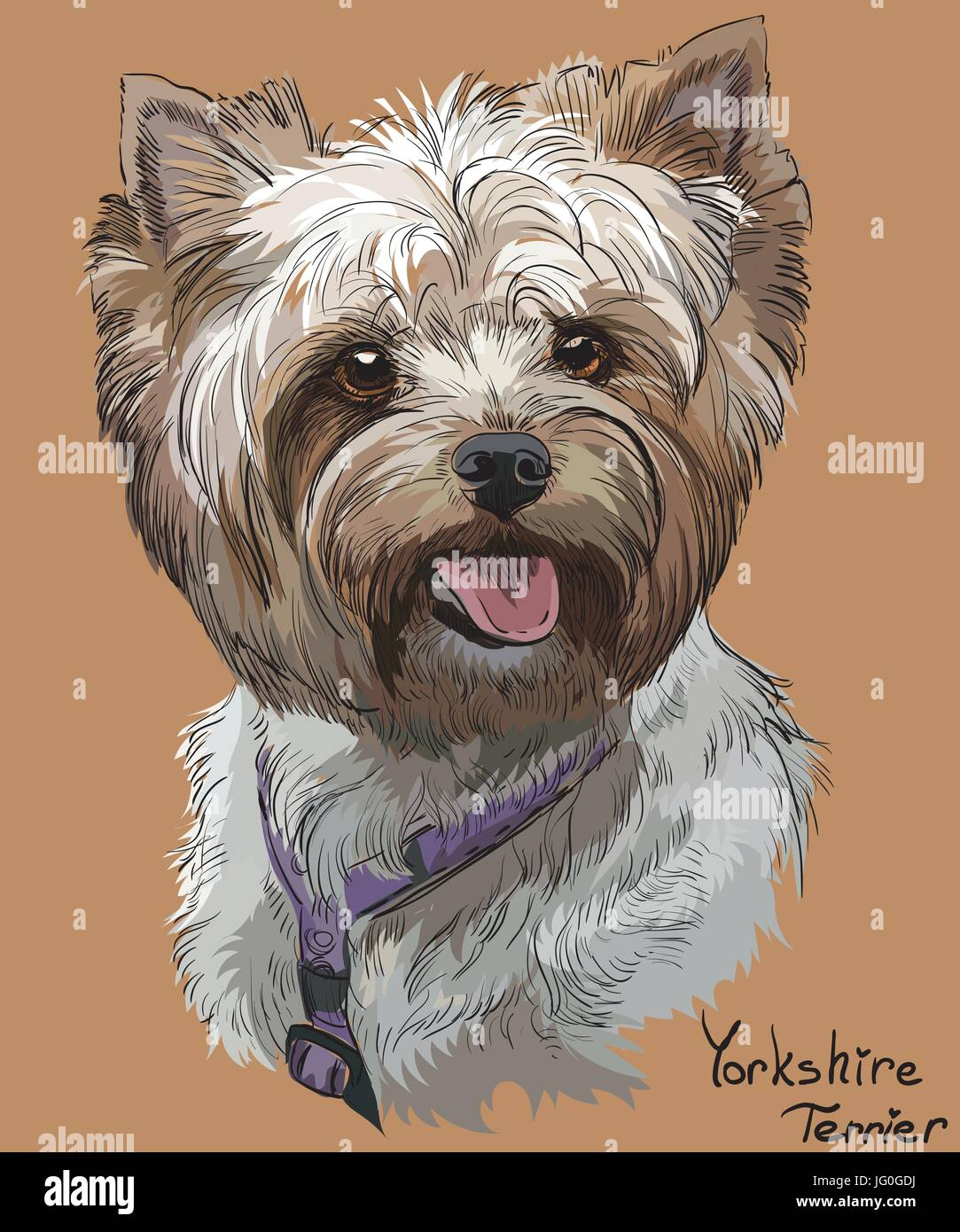 Vector Portrait Of Yorkshire Terrier In Diferent Color Hand Drawing