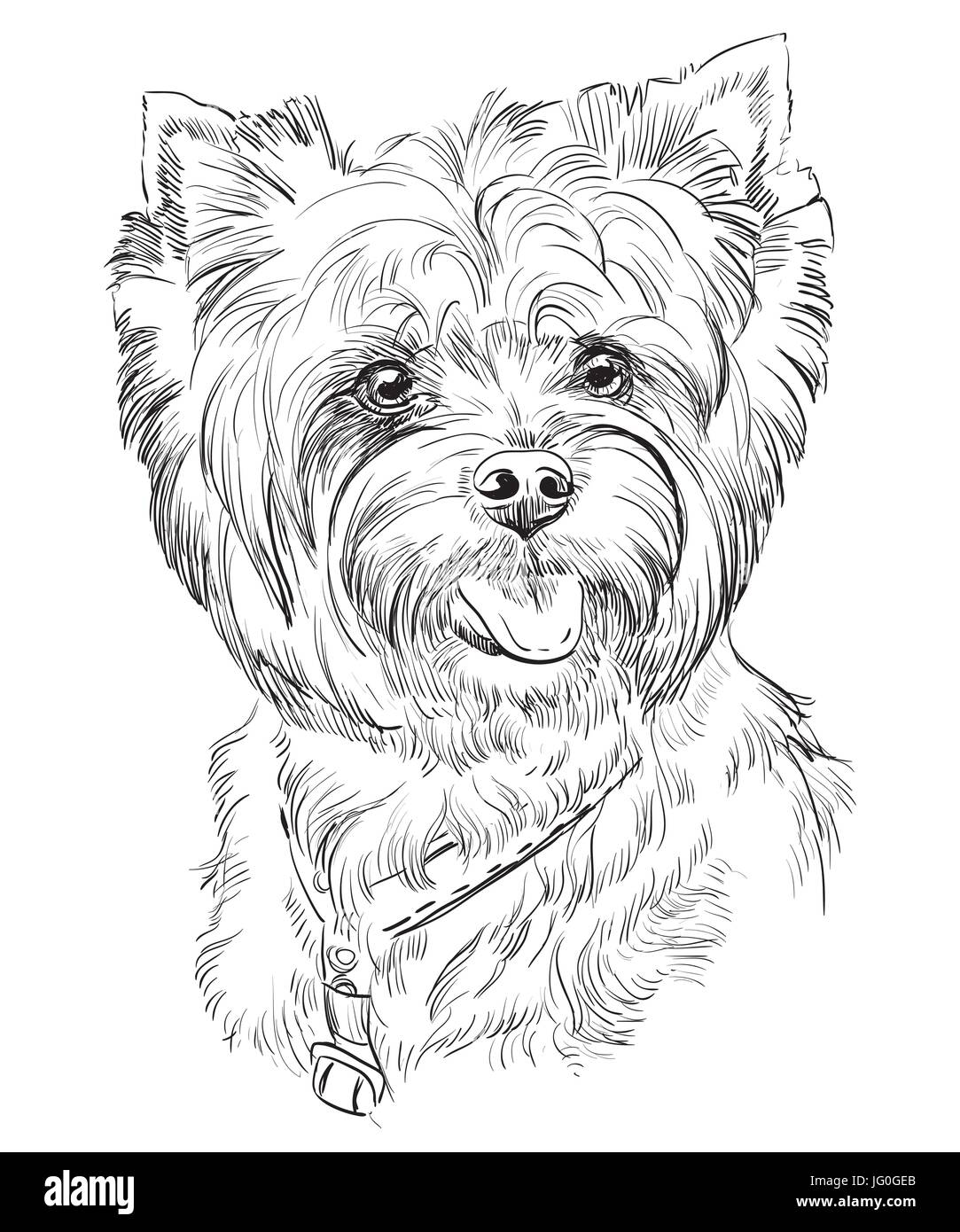 Vector Portrait of Yorkshire Terrier in black color hand drawing Illustration on white background - Stock Image