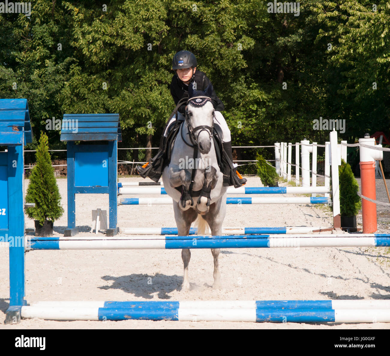 Girl with roan pony jumping over the hurdle on showjumping competition - Stock Image