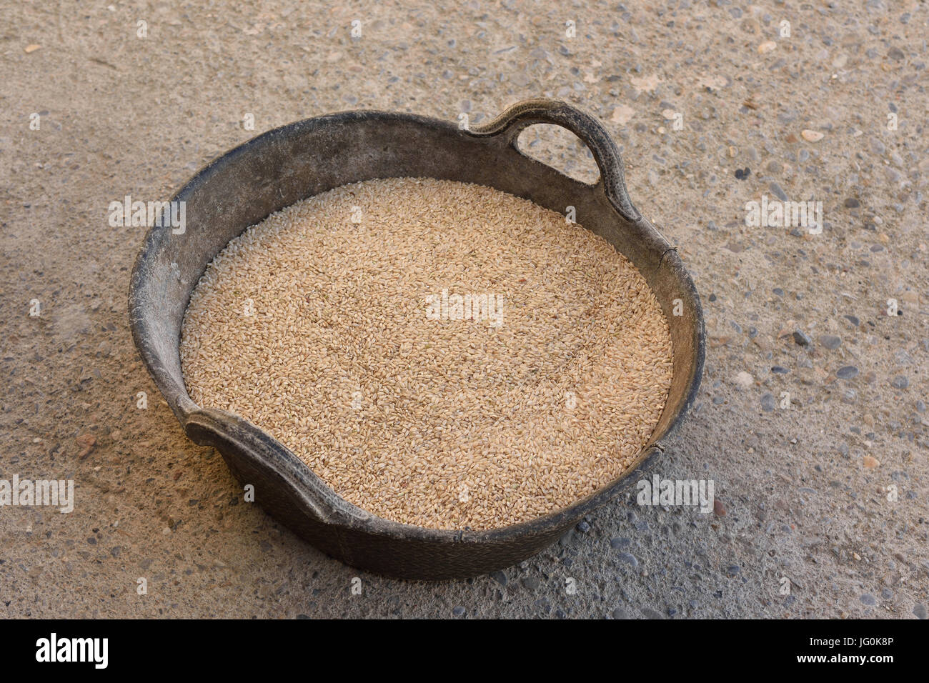 Rice from Pals Girona privince,Catalonia,Spain Stock Photo