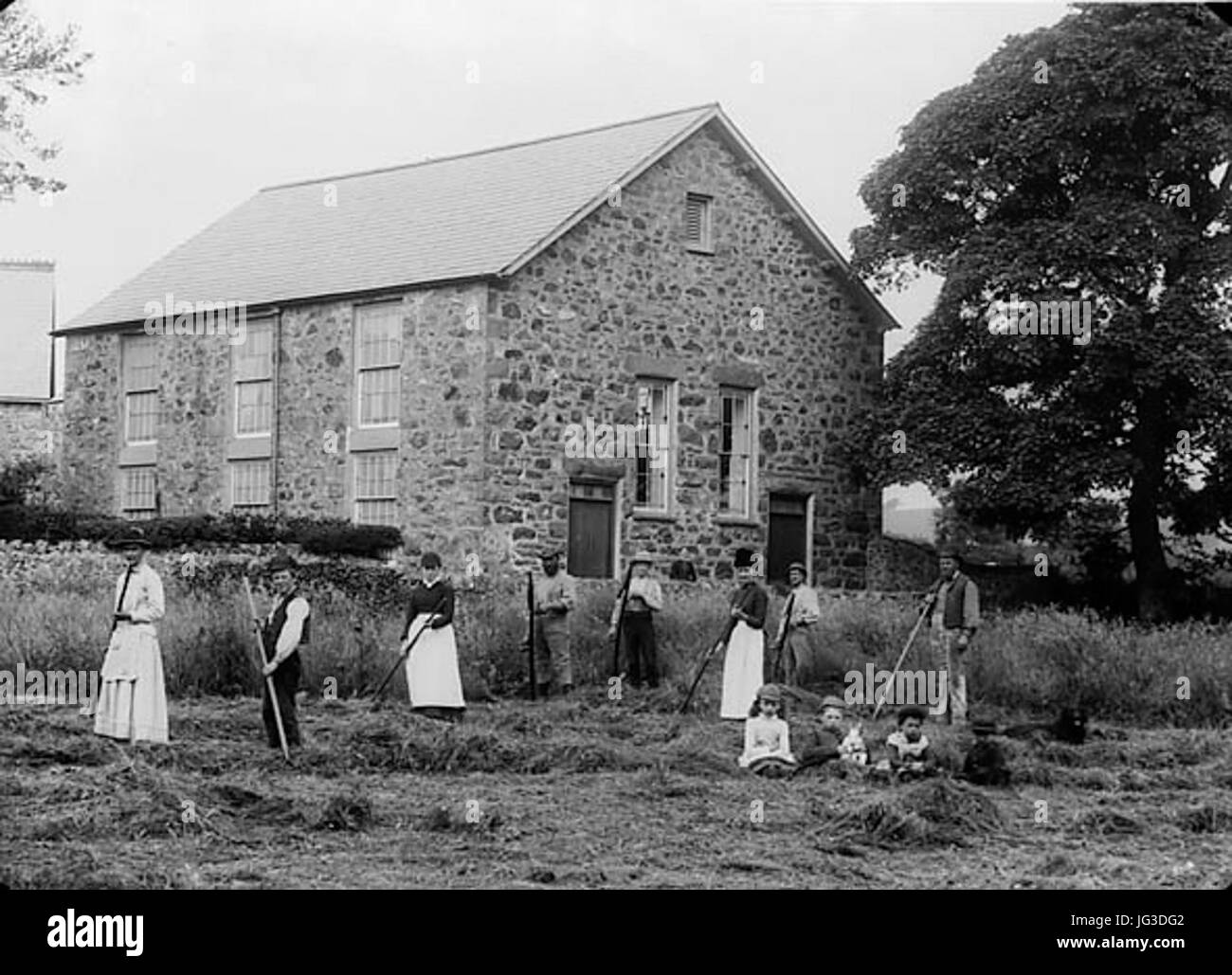 Hay-making outside the Calvinistic Methodist chapel Aber-erch NLW3363 2 - Stock Image