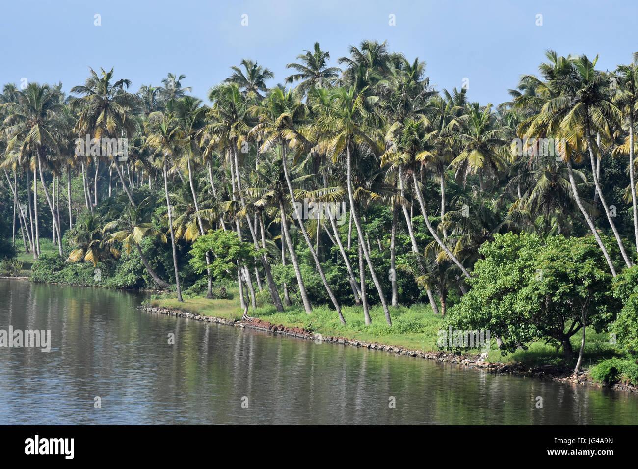 Coconut trees of Kerala Stock Photo