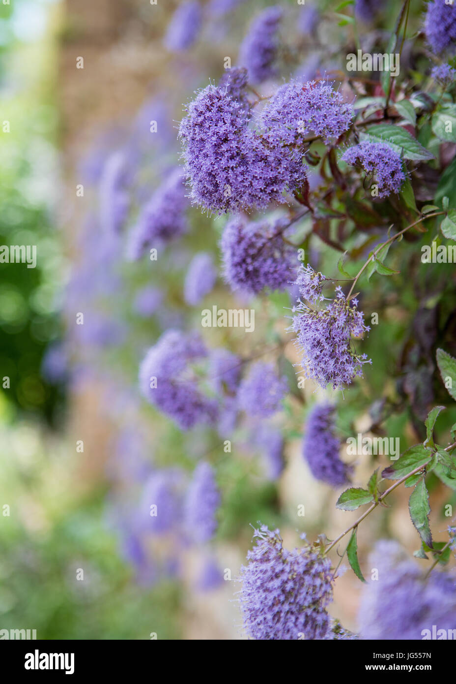 Plants growing on a wall at the Alhambra Palace and fortress located in, Granada, Andalusia, Spain. Stock Photo