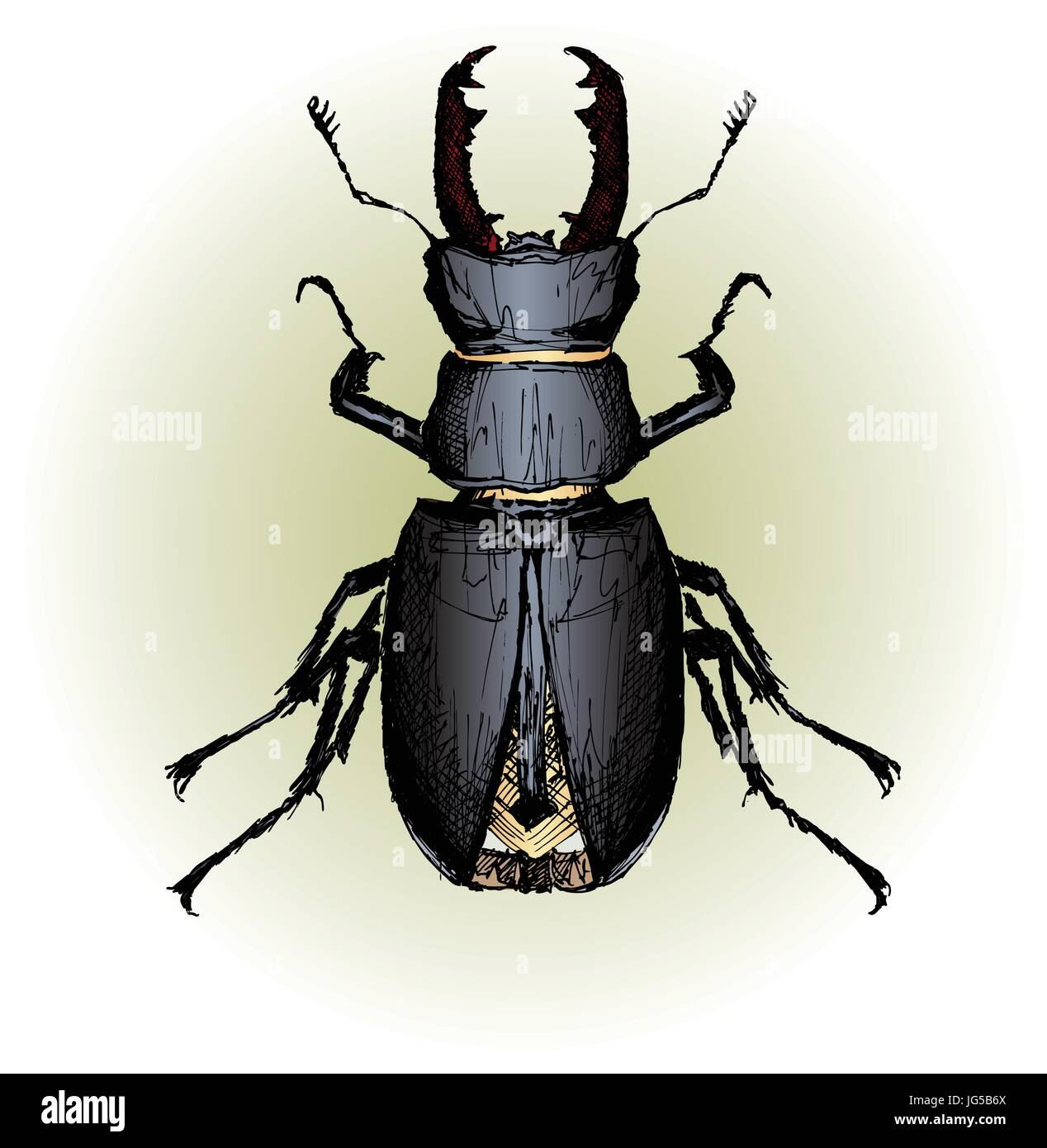 Vector illustration of Lucanus cervus (Stag beetle) (hand drawing) - Stock Vector