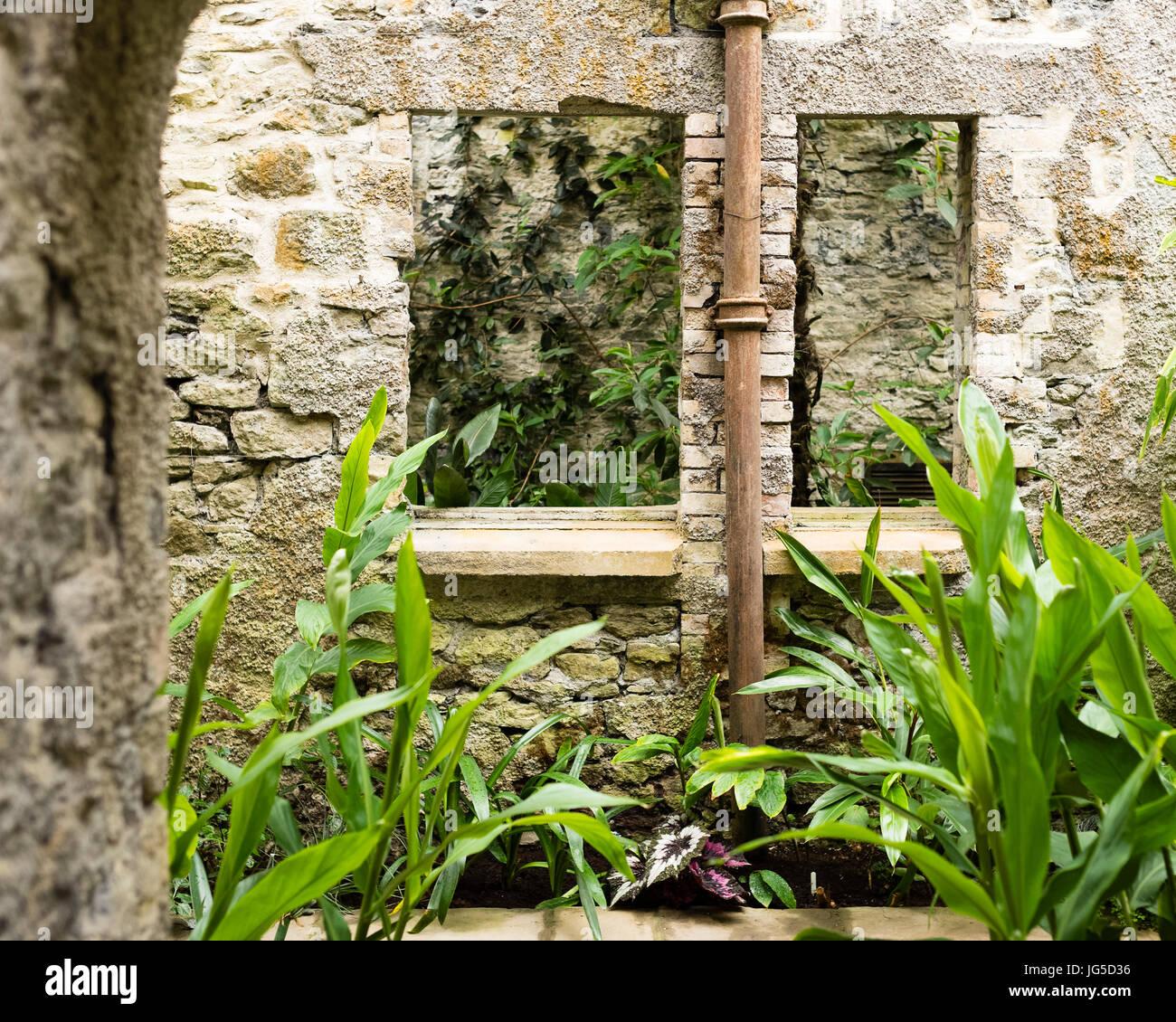 The subtropical indoor garden at Aberglasney, Carmarthenshire, Wales, UK - Stock Image