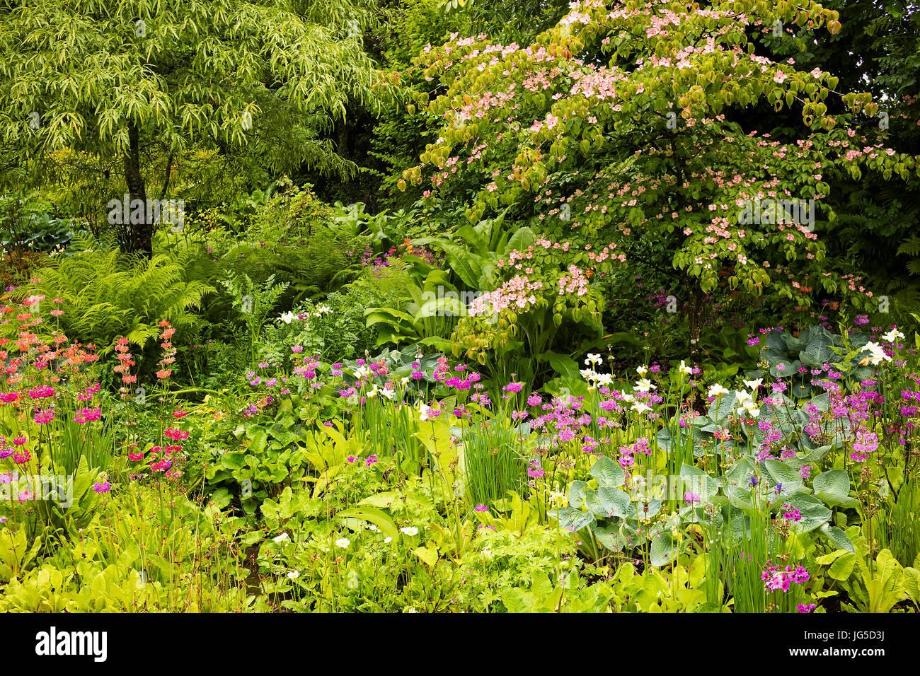 Part of the Stream Garden at Aberglasney, Carmarthenshire, Wales, UK - Stock Image