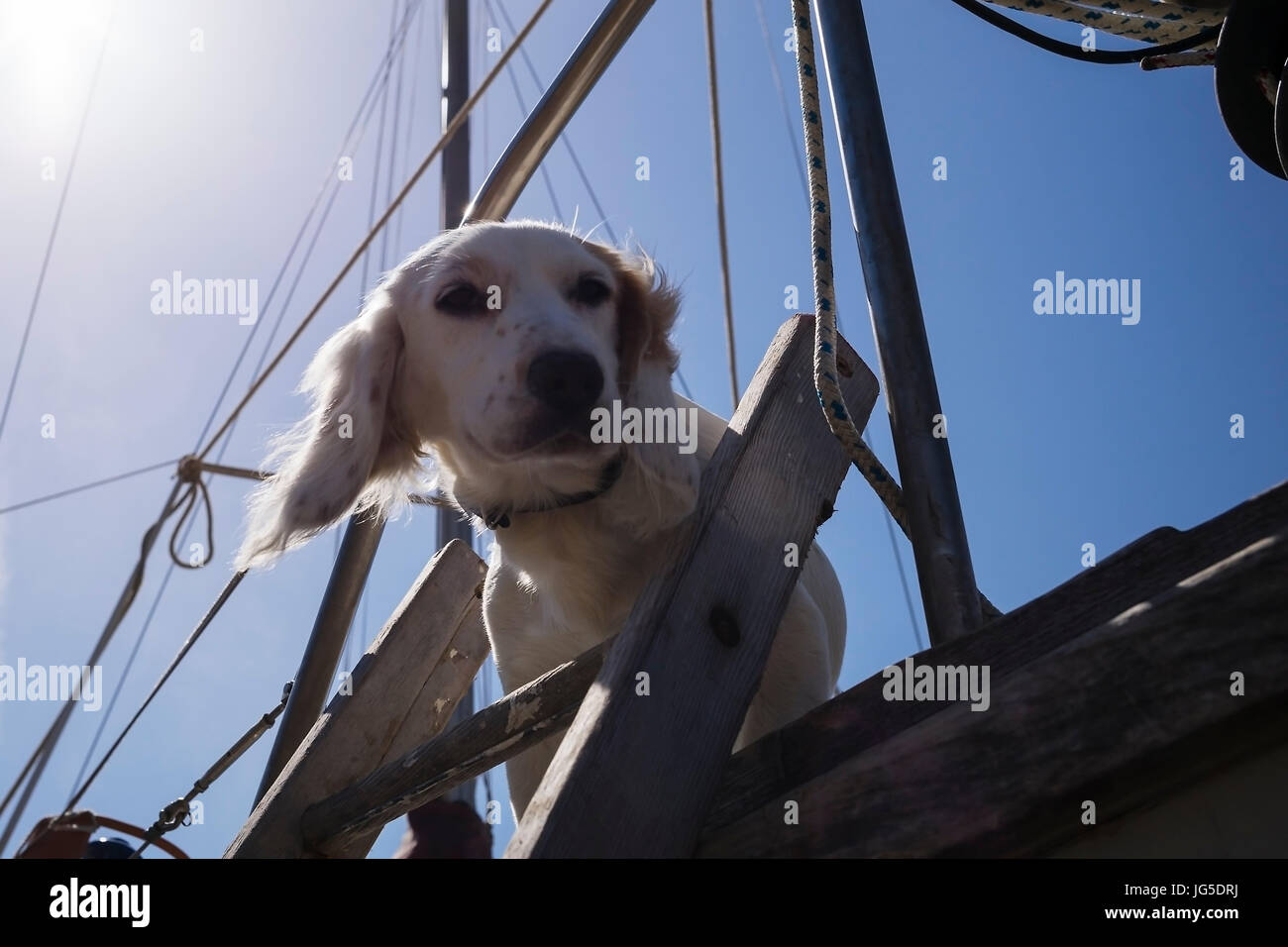 A cute dog in Barmouth Harbour, Gwynedd, Wales, UK - Stock Image