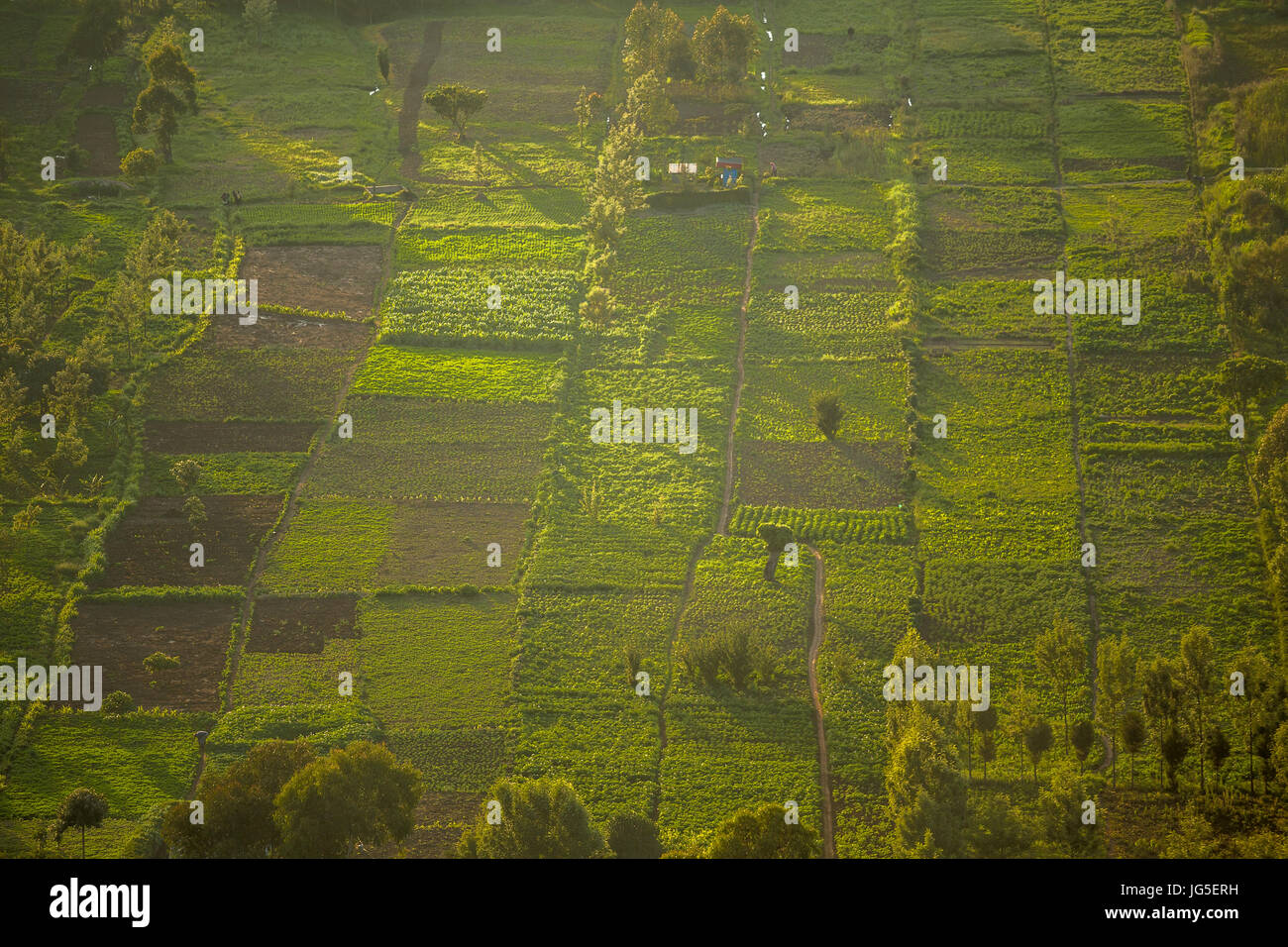 Small squared fields at sunset, Great Rift Valley, Kenya, East Africa Stock Photo