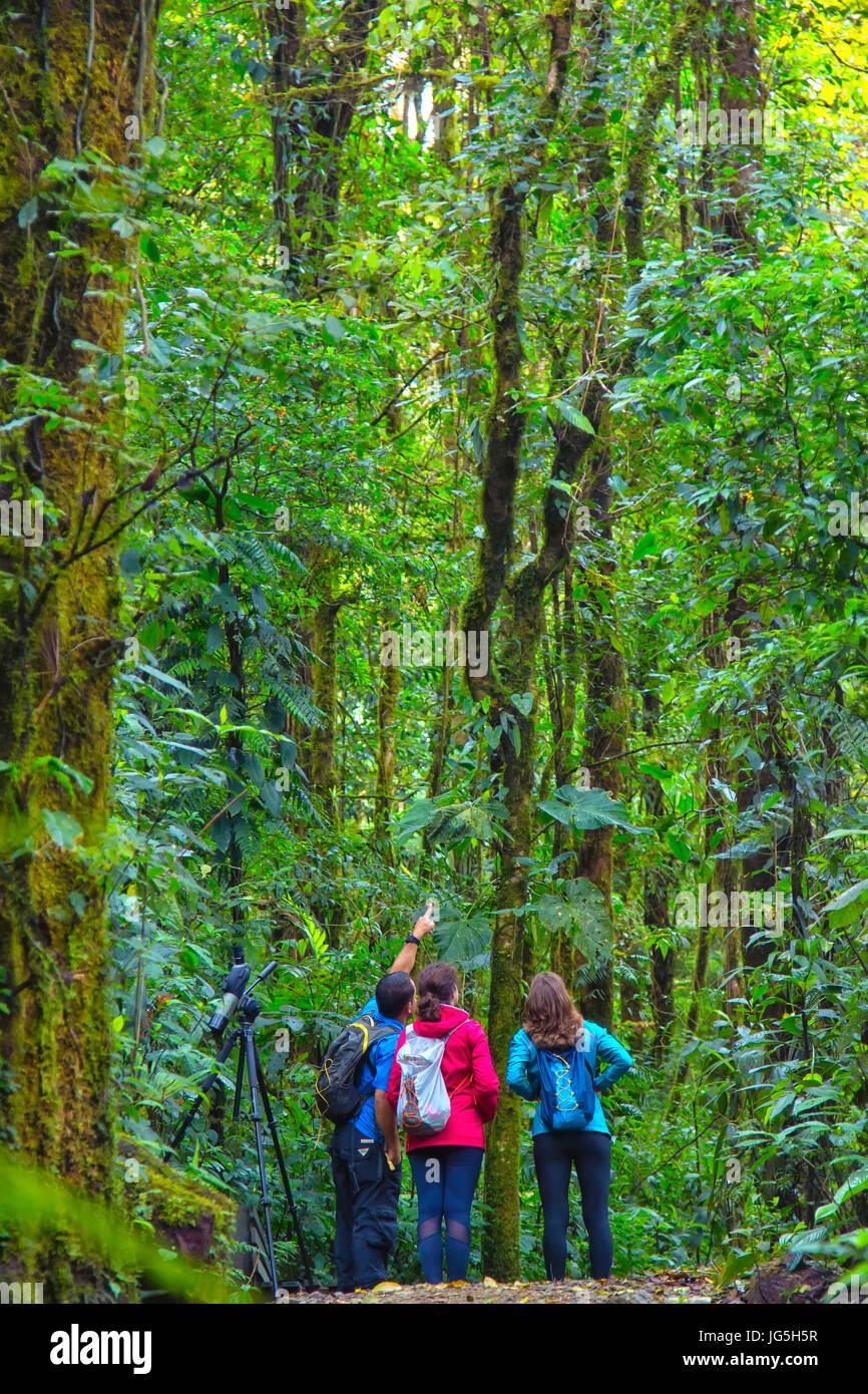 Monteverde biological reserve, Costa Rica Stock Photo