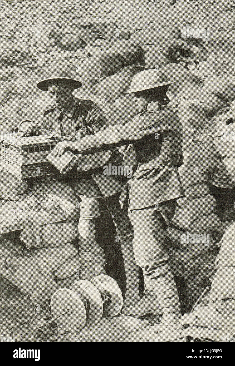 Soldiers giving water to their Carrier Pigeons - Stock Image