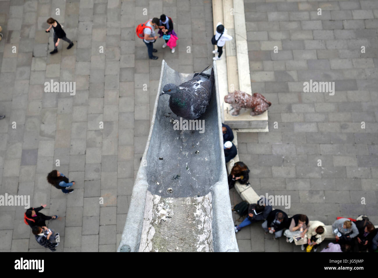 Pigeon in a gutter spout looks over unsuspecting tourists in St. Marks Square, Venice, Italy - Stock Image