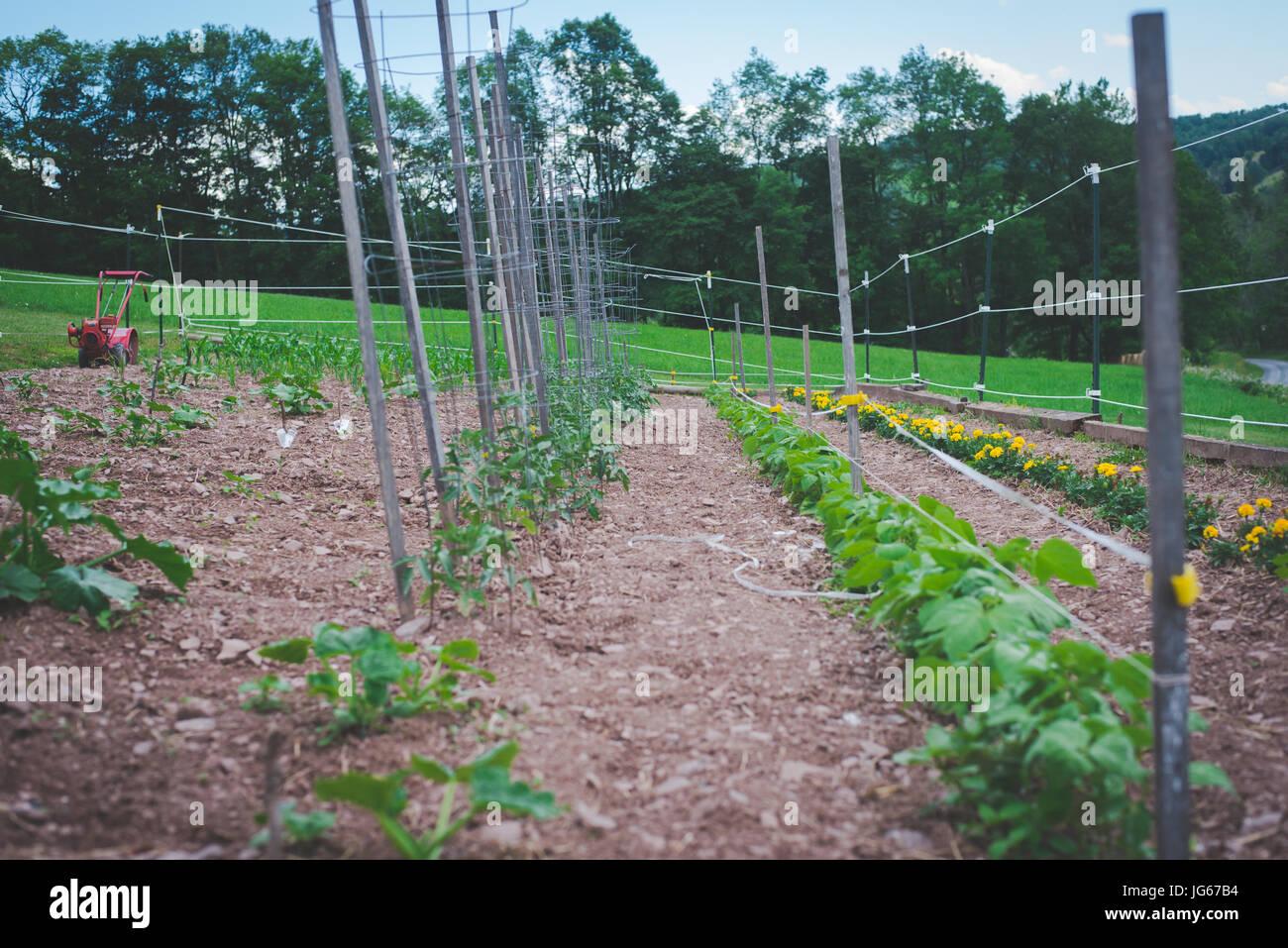 a garden in rural Pennsylvania. - Stock Image