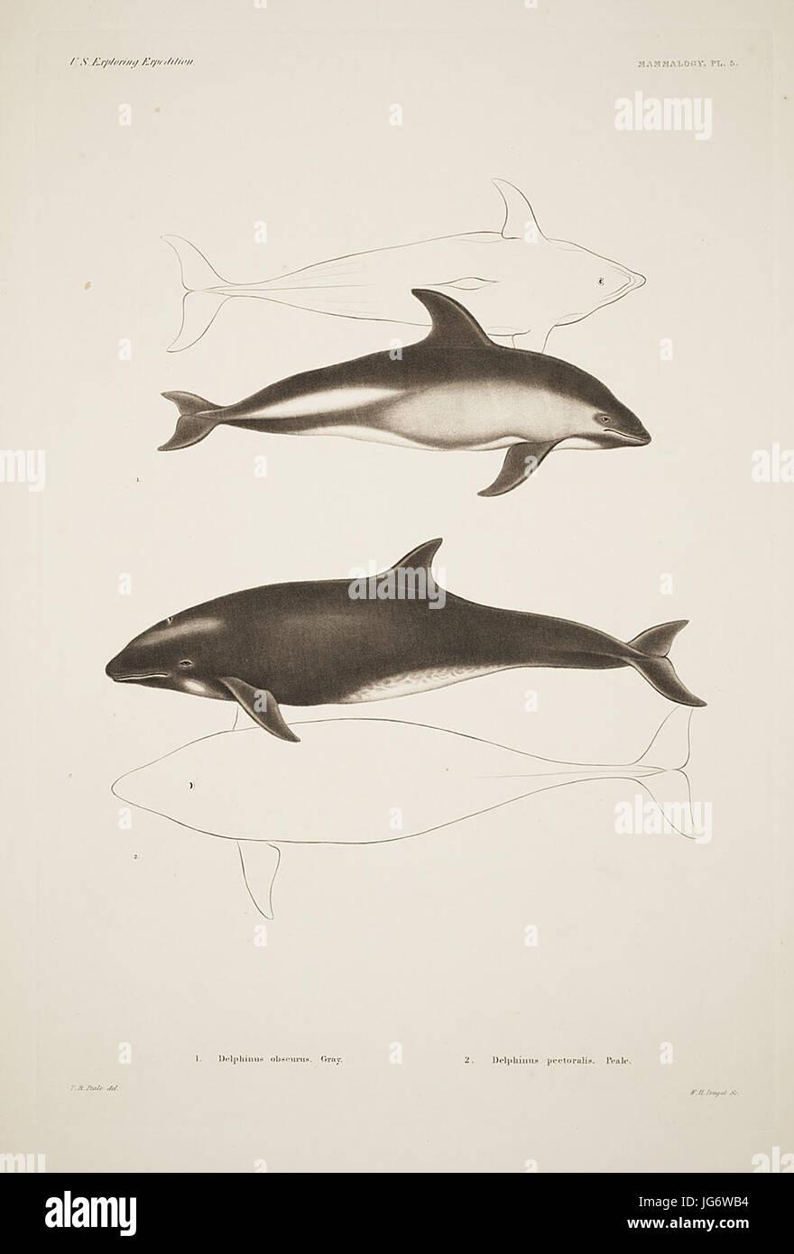 Mammalogy and Ornithology. Mammalogy. Plate 5 - Stock Image