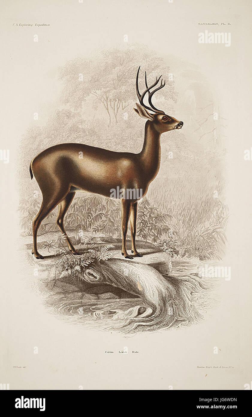 Mammalogy and Ornithology. Mammalogy. Plate 11 - Stock Image