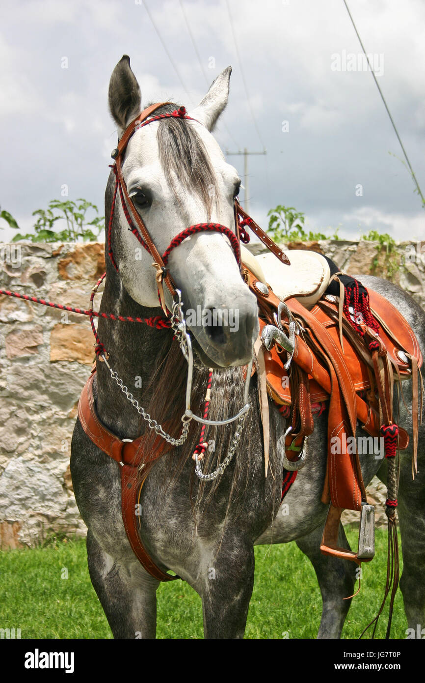 Mexican Charro Saddle High Resolution Stock Photography And Images Alamy