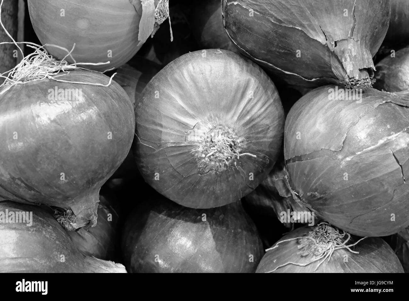 Black and white still life of onions - Stock Image