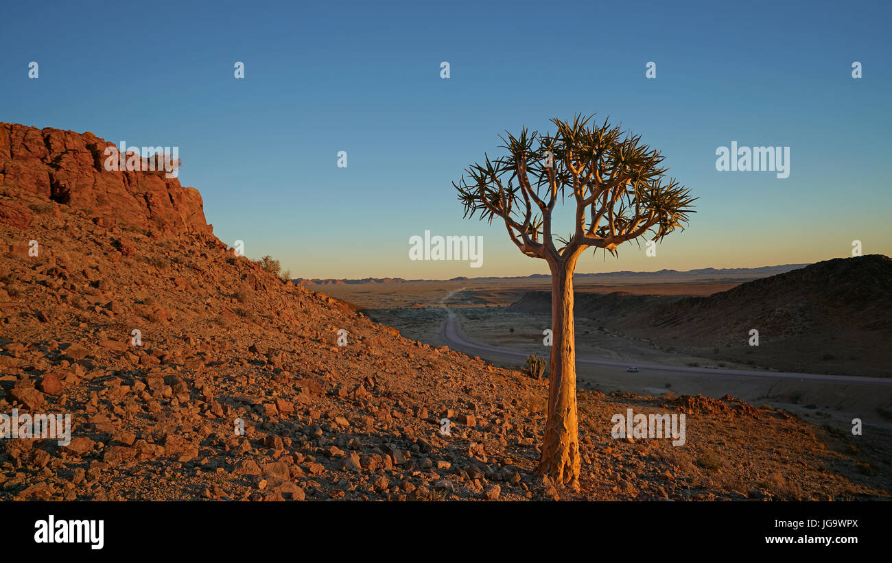 Quiver Tree and sunset in Fish River Canyon - Stock Image