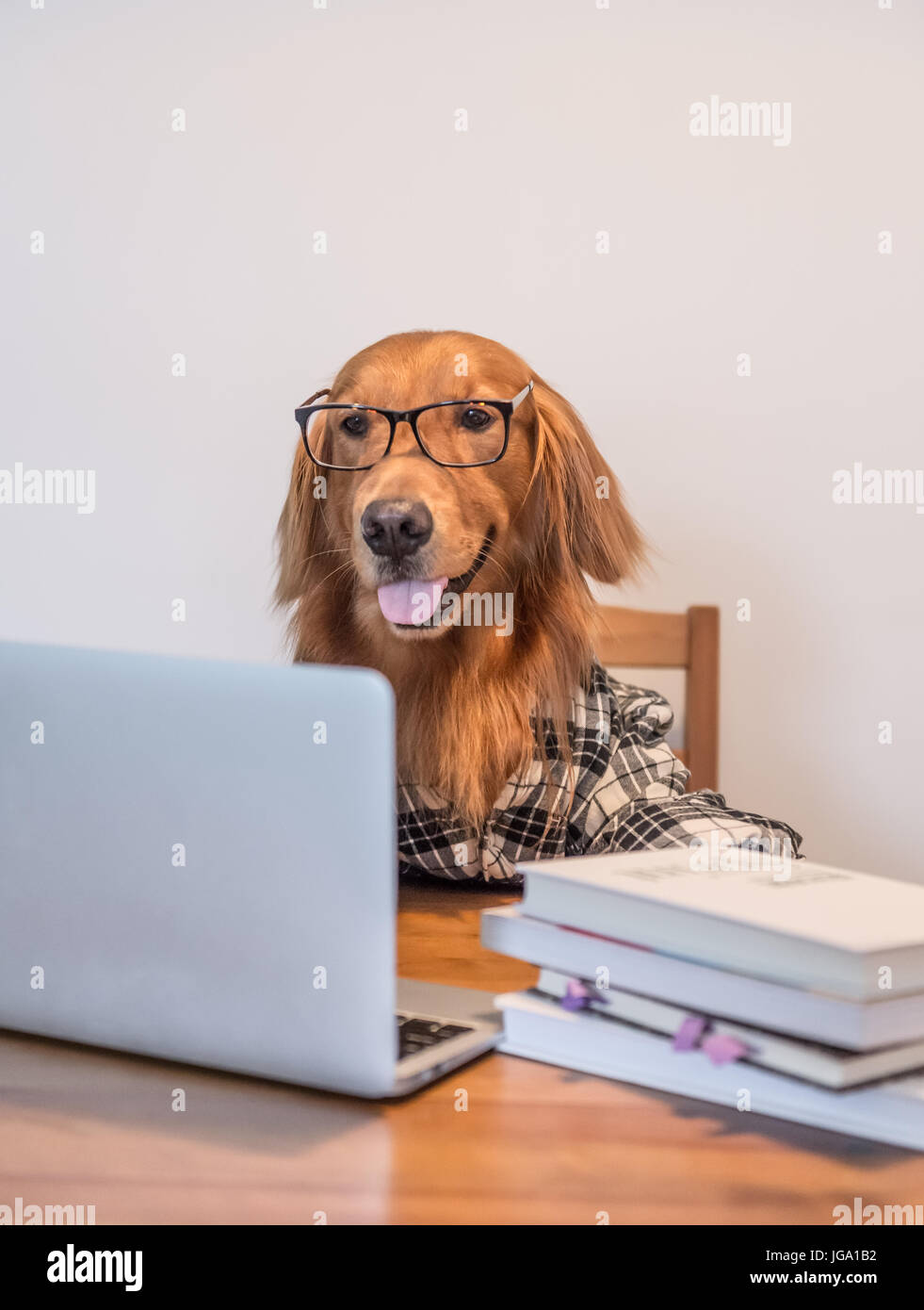 golden-retriever-in-the-use-of-computers