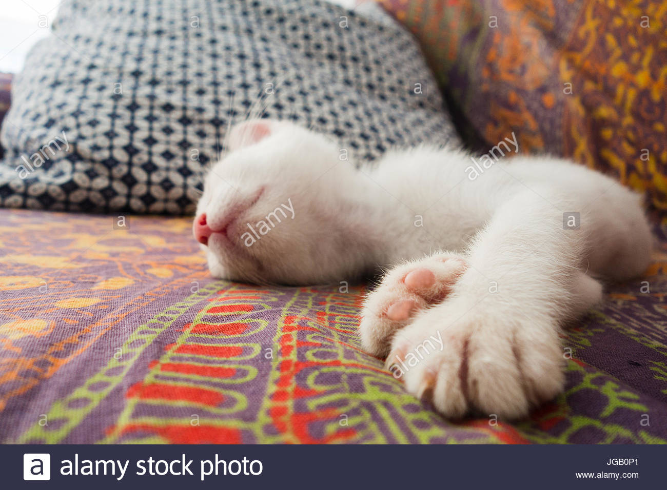 cat on the sofa - Stock Image