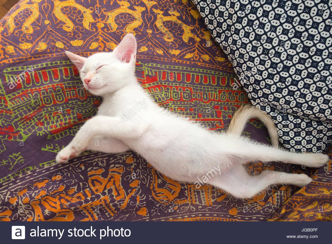Long cat relaxing - Stock Image