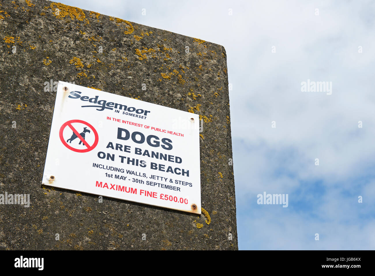Sign warning about taking dogs on beach, England UK Stock Photo