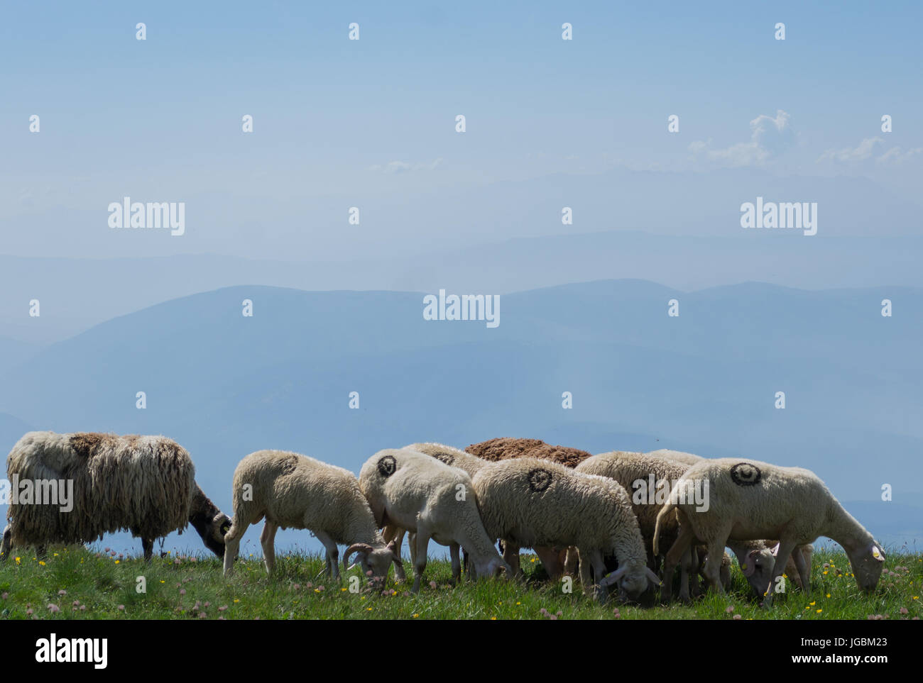 A Sheep herd on Shar Mountains - Stock Image