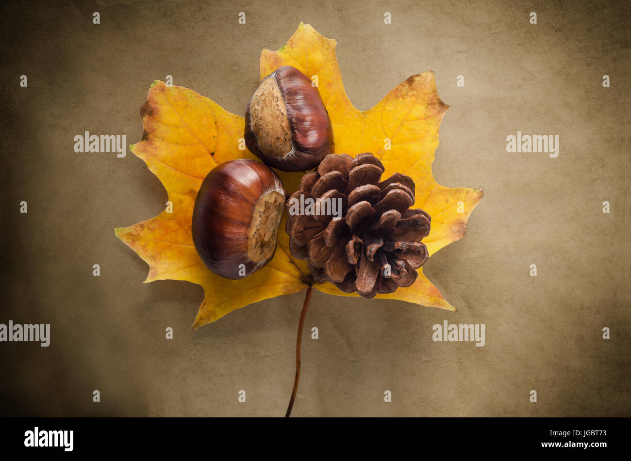 A single Sycamore leaf in Autumn (Fall) hues on antiqued, vignetted paper with conkers and fir cone. - Stock Image