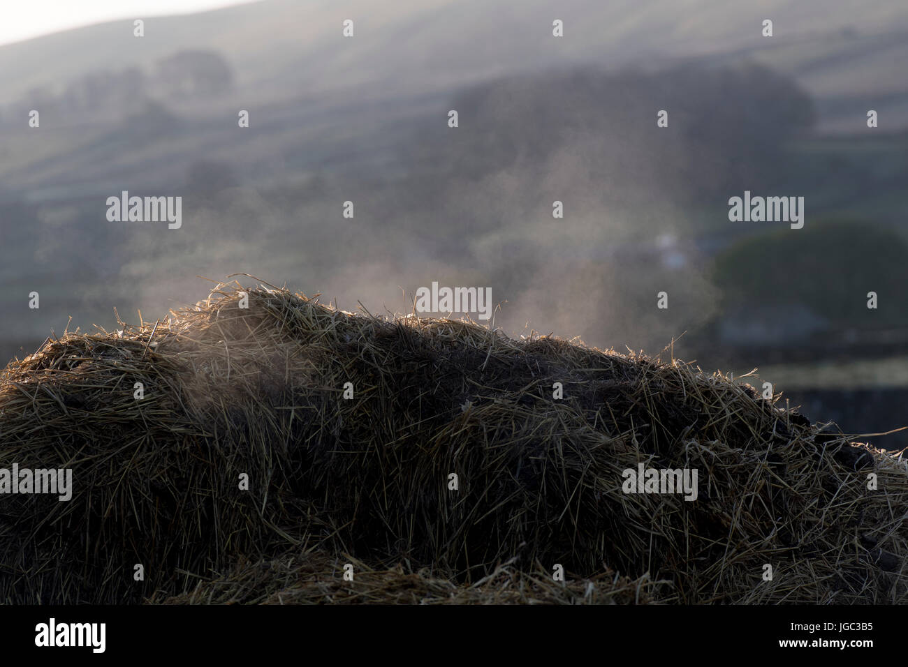 Pile of farmyard manure steaming and decomposing and releasing gasses into atmosphere. - Stock Image