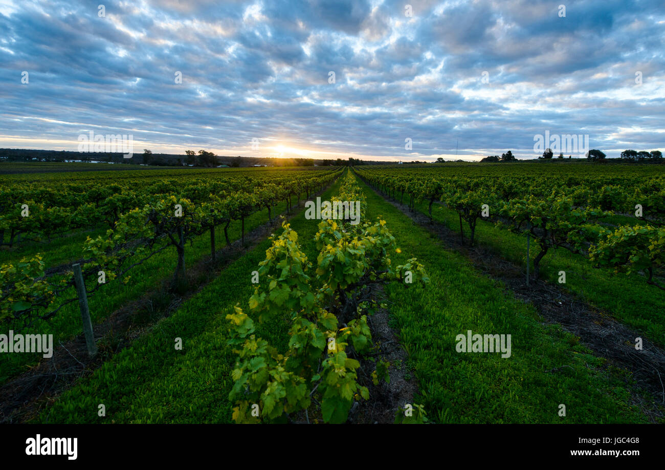 Winery in South Australia Stock Photo