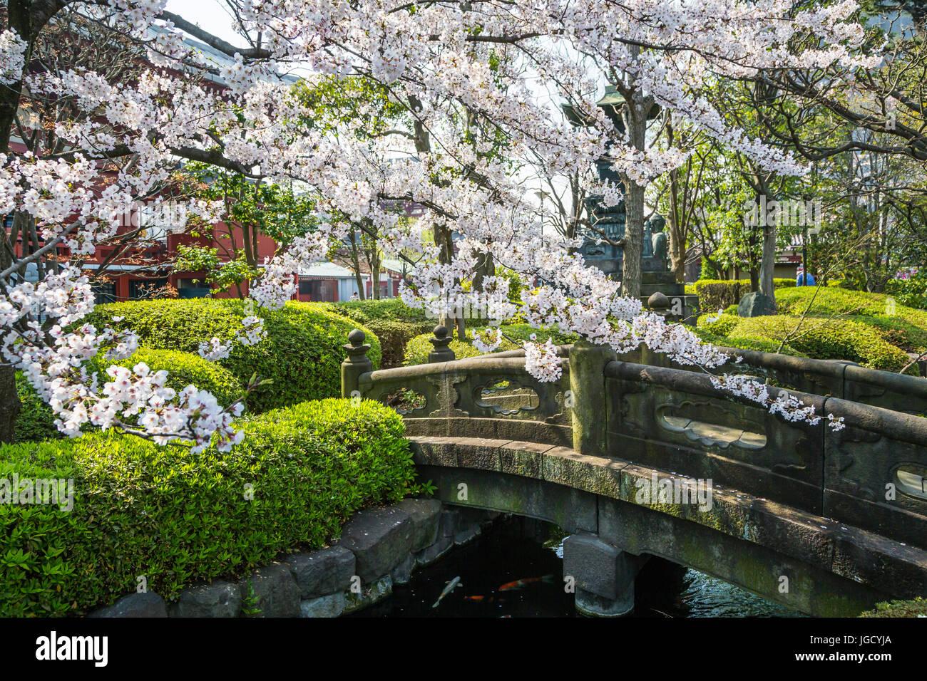 A Stone Bridge With Cherry Blossom Trees In Asakusa Tokyo Japan