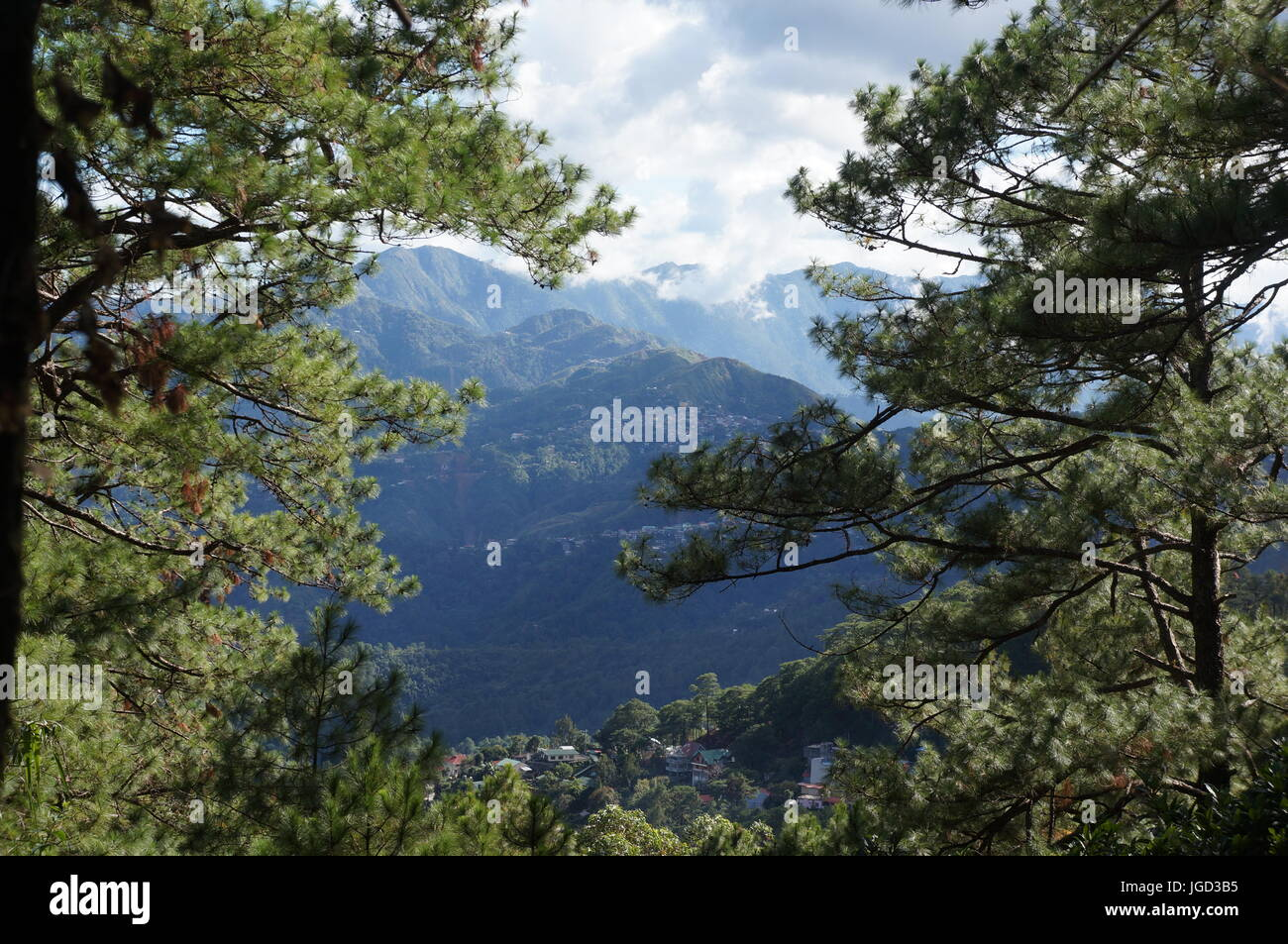 Mountain view background framed by green evergreen tree forest.  Mountains covered in tall trees and a cloudy sky. Stock Photo