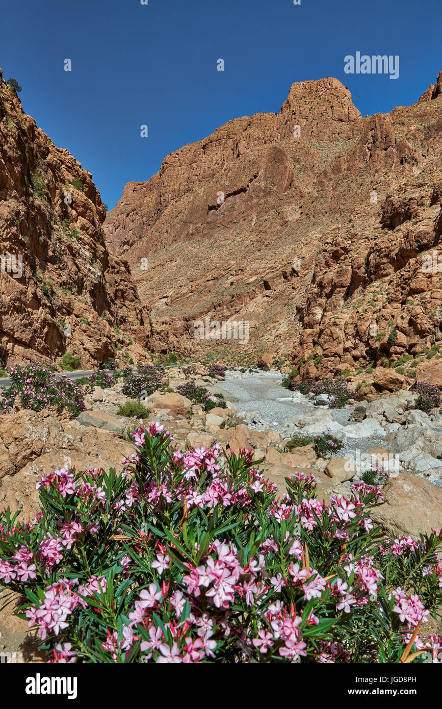 oberer Teil der Todra-Schlucht, Tinghir, Marokko, Afrika |upper part of Todgha Gorge,  Tinghir, Morocco, Africa| Stock Photo
