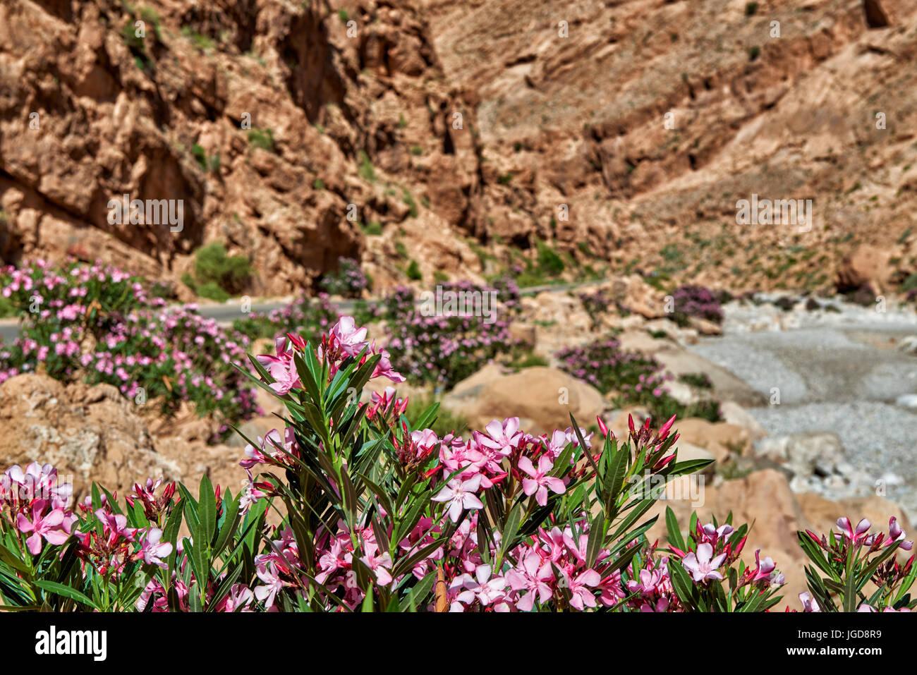 oberer Teil der Todra-Schlucht, Tinghir, Marokko, Afrika  upper part of Todgha Gorge,  Tinghir, Morocco, Africa  Stock Photo