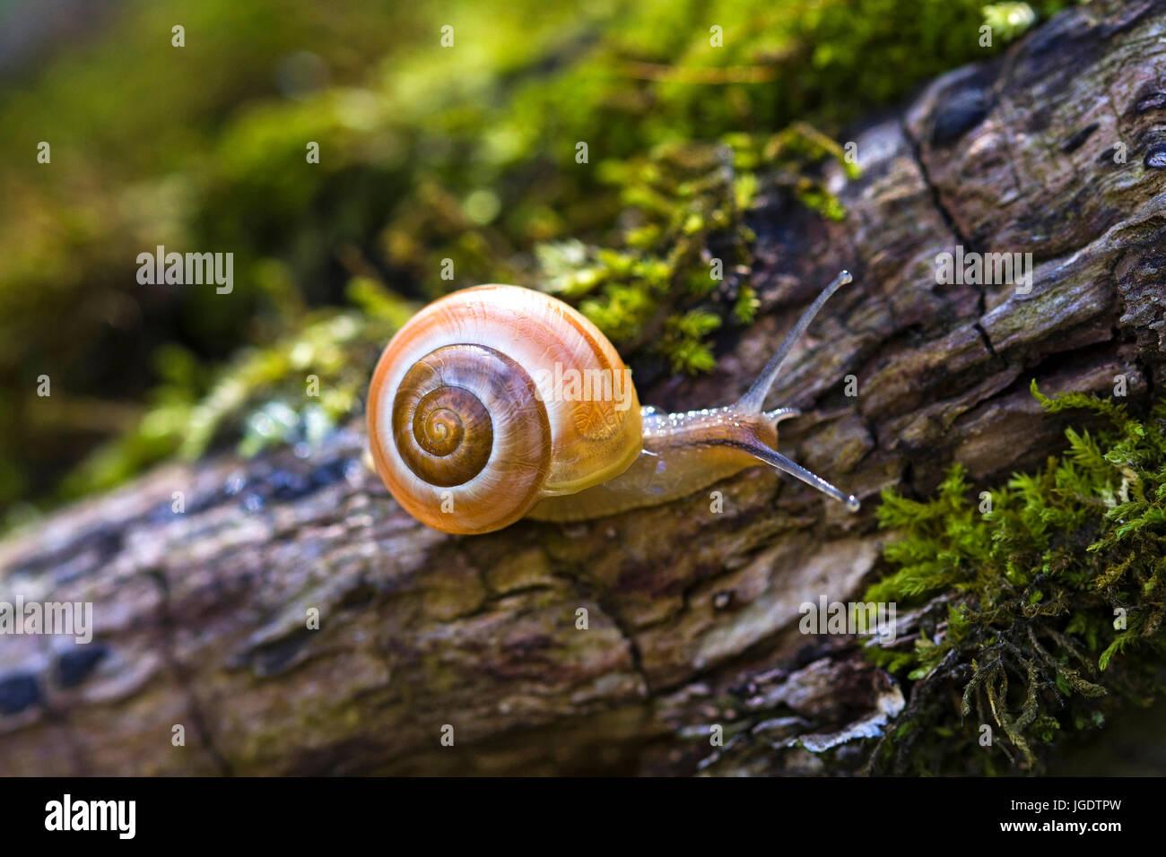 Garten Bänderschnecke Stock Photos Garten Bänderschnecke Stock