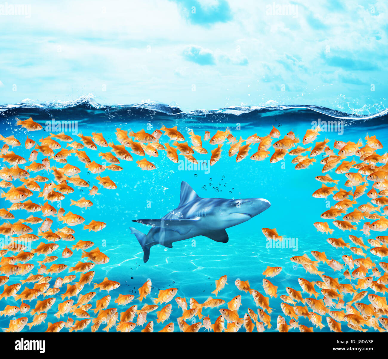 Goldfishes group surround the shark. Concept of unity is strenght,teamwork and partnership - Stock Image