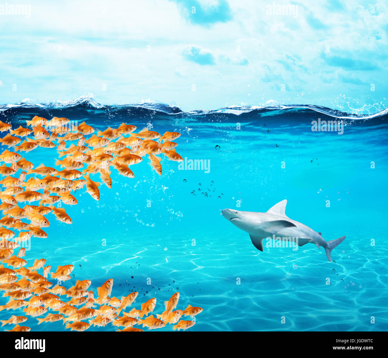Goldfishes group make a big mouth to eat the shark. Concept of unity is strenght,teamwork and partnership - Stock Image