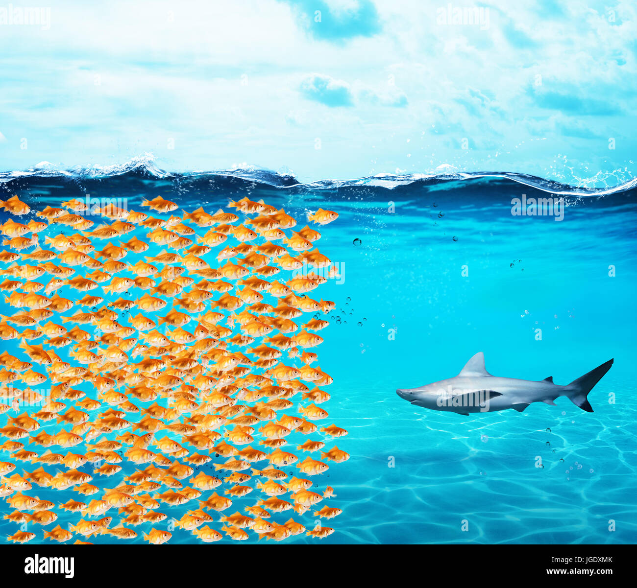 Goldfishes group make a wall against the shark. Concept of unity is strenght, teamwork and partnership - Stock Image