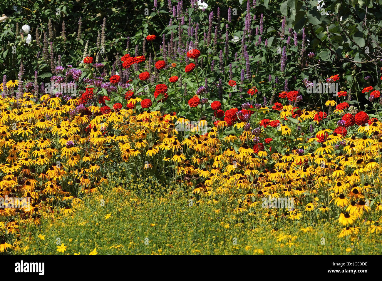 Solar hat and red zinnia, Sonnenhut und Rote Zinnie - Stock Image