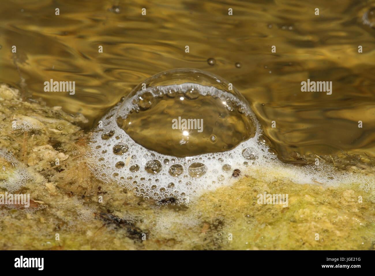 Bubbles on the garden pond, Blasen auf dem Gartenteich - Stock Image