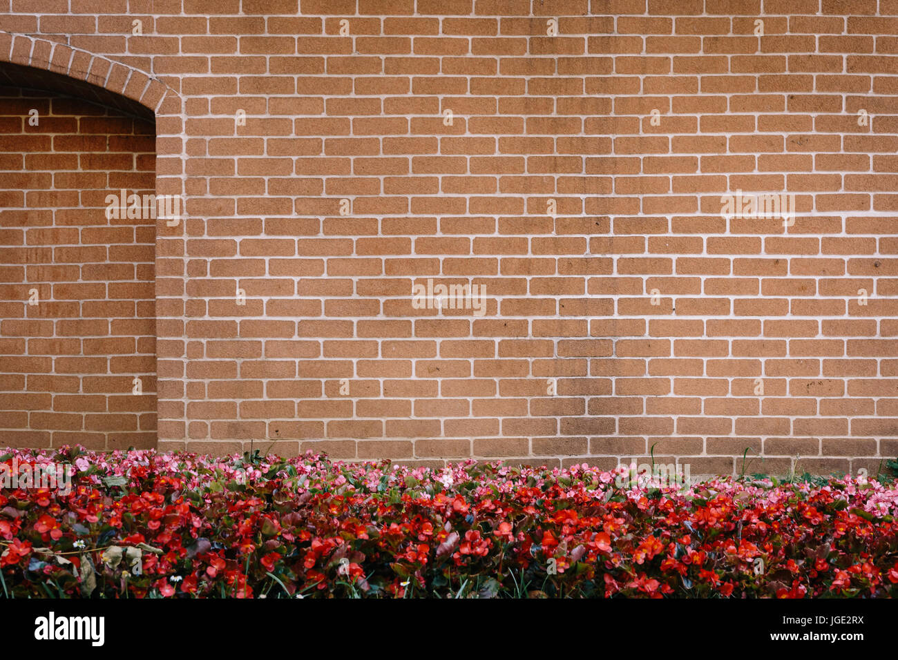 Texture of bricks wall with red flowers in front - Stock Image