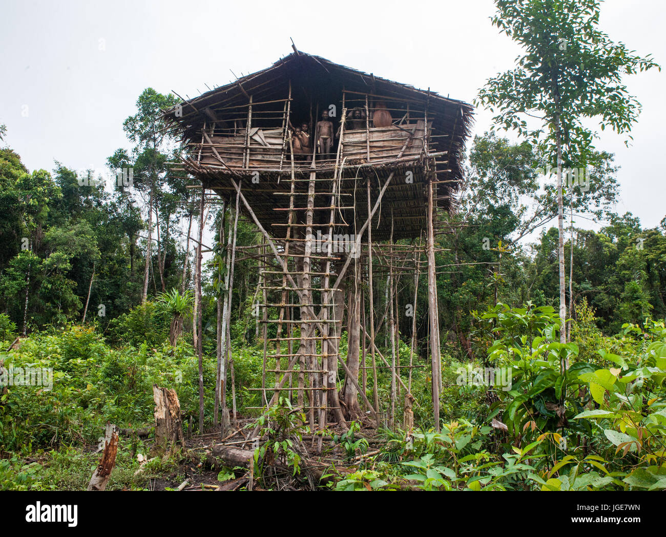 Picture of: Korowai Tribe High Resolution Stock Photography And Images Alamy