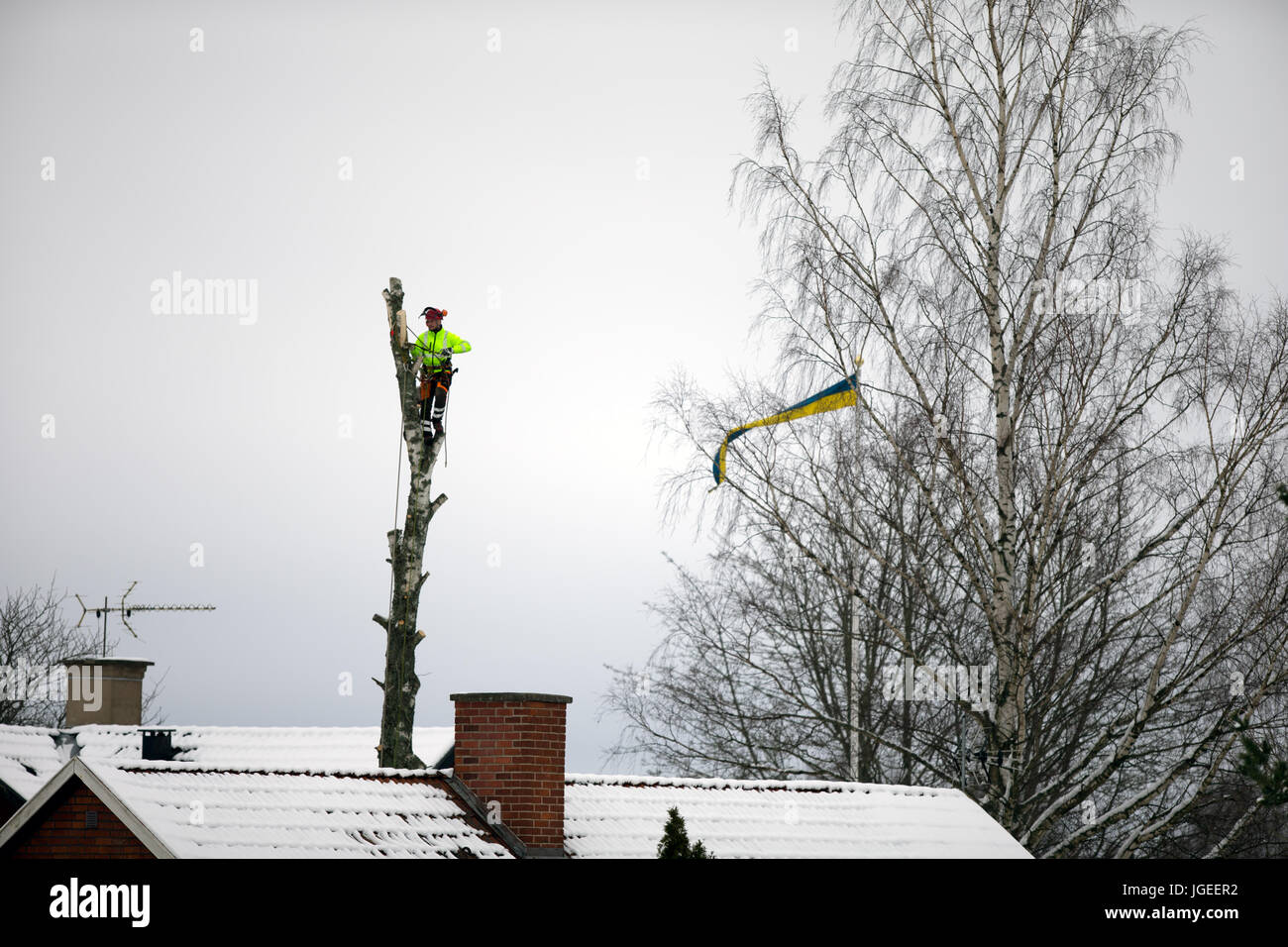 Tree Cutting Specialist - Stock Image