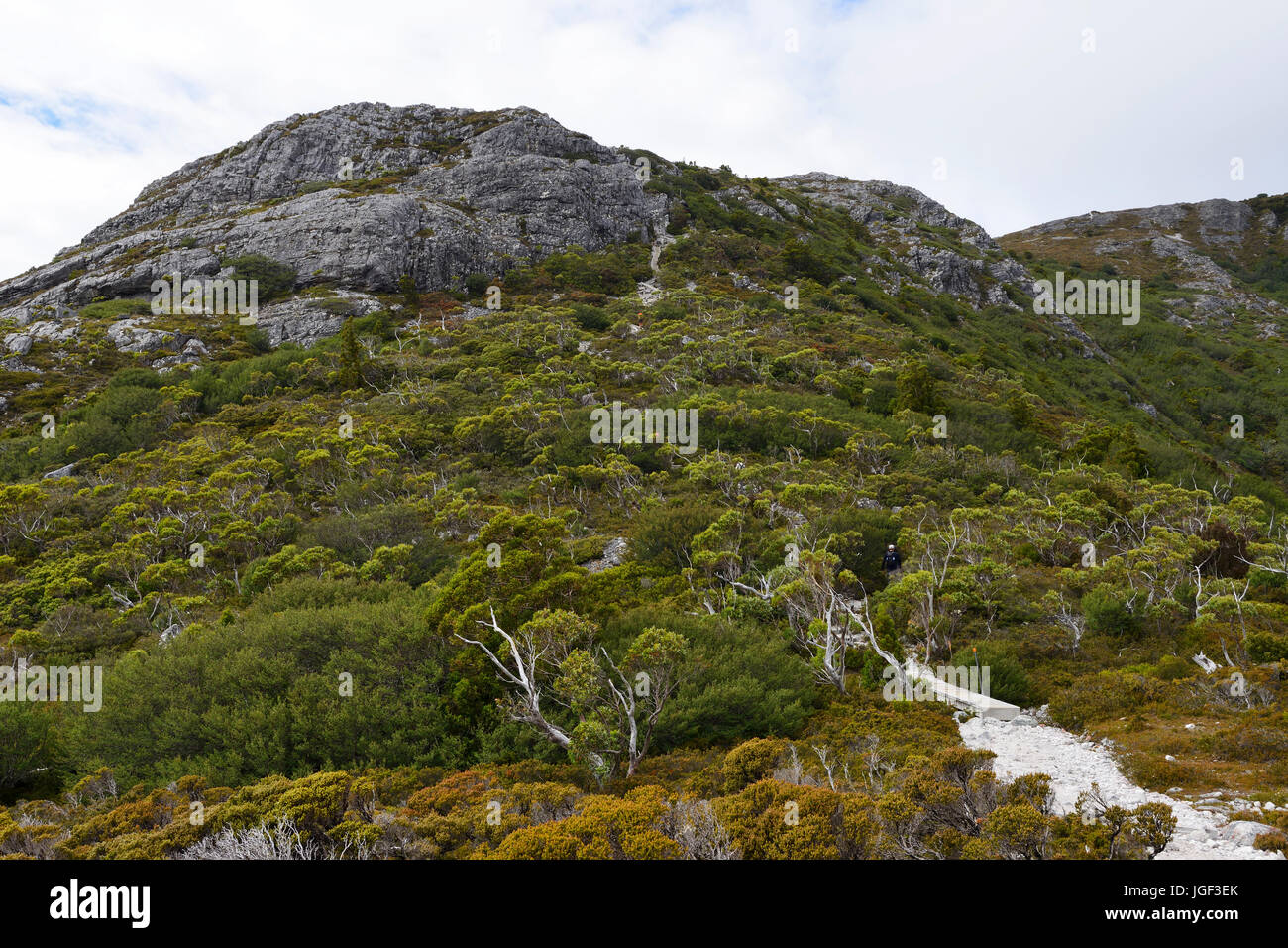 Overland track ascending to Marions Lookout, Cradle Mountain-Lake St Clair National Park, Tasmania, Australia - Stock Image